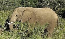 Elephant 2975682 640 250x150